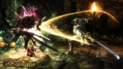 Kingdoms of Amalur: Reckoning: Battling a Niskaru Hunter Screenshot.