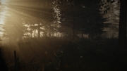 The Forest: Neue Screens zum Survival-Spiel.