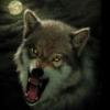Prisoner Foxer